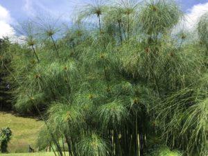 ANDREA CASTILLO: Meditación guiada Metta 1. Noviembre 11 de 2018